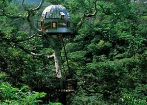 treehouses06